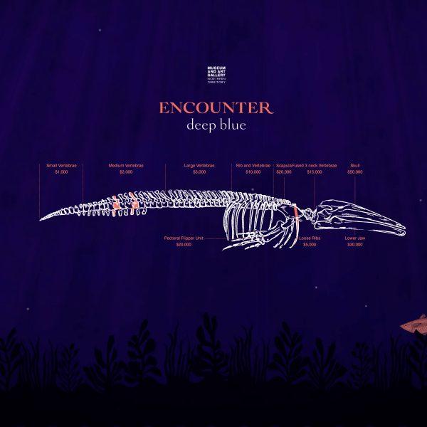 Encounter Deep Blue Whale Skeleton Fundraising